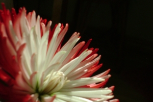 Vacuum Flower