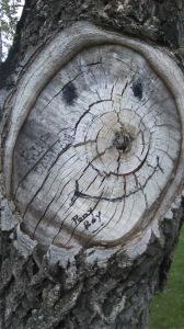 Tree:face